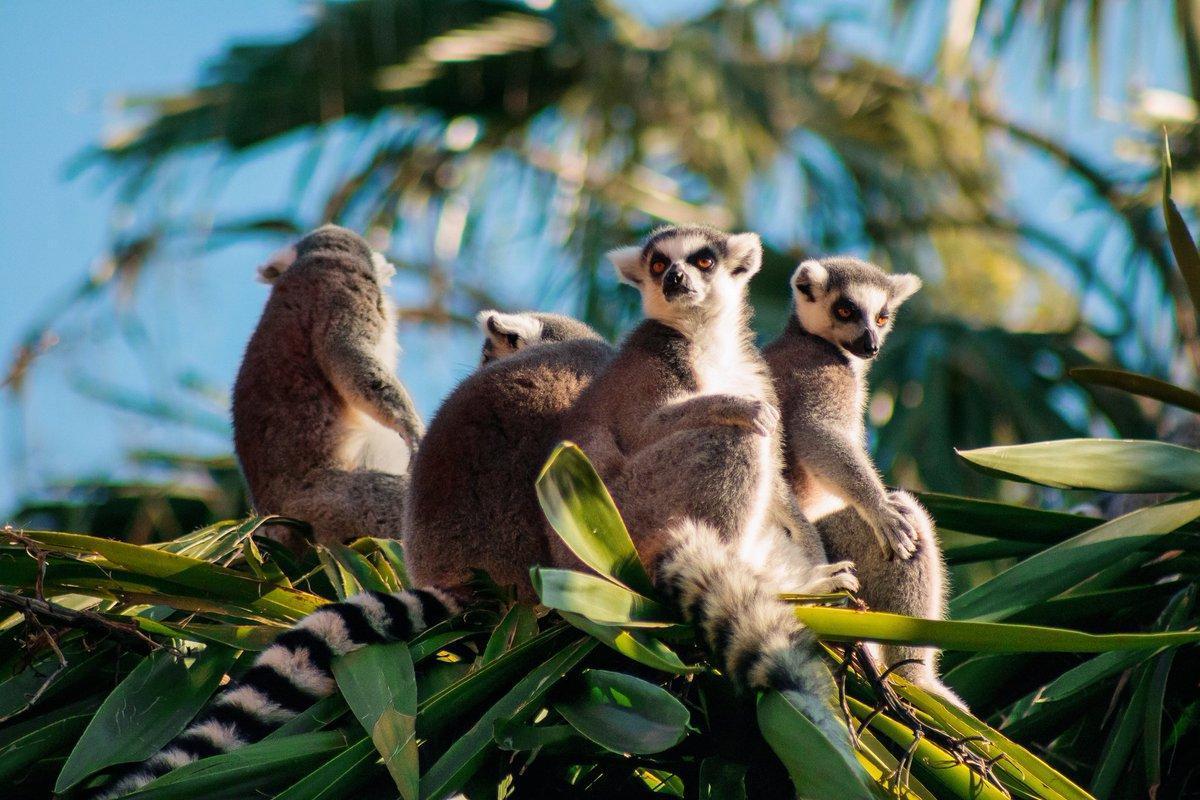 Blog animaux : quelle est la principale importance des animaux dans la vie d'un être humain ?